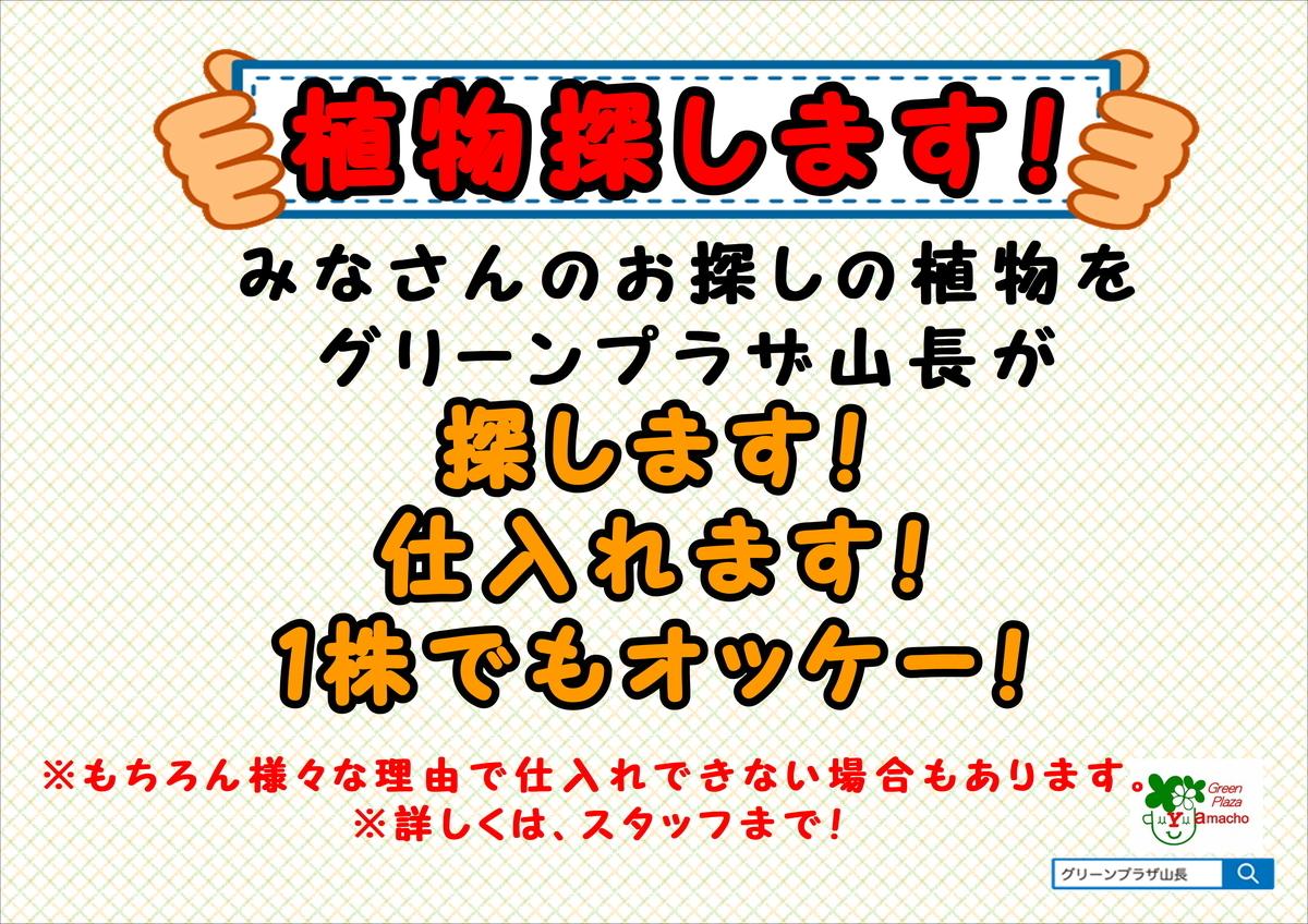 f:id:GP-Yamacho:20190607161851j:plain
