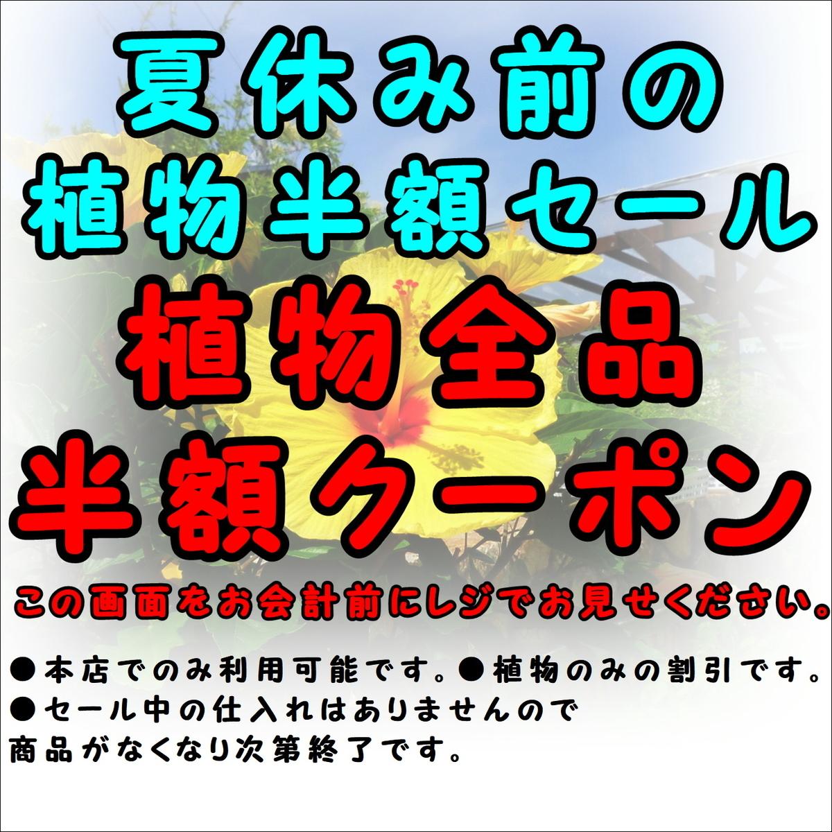 f:id:GP-Yamacho:20190808094314j:plain
