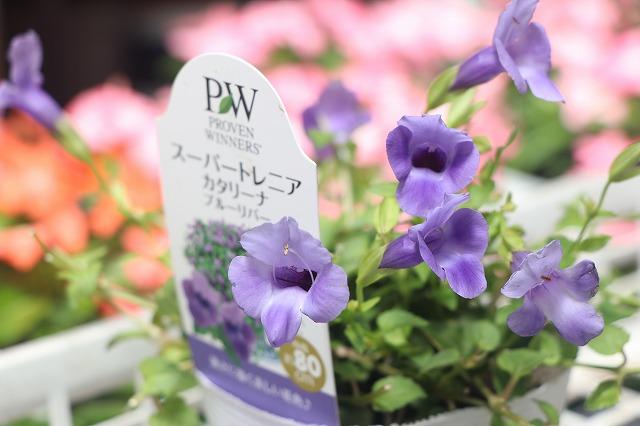 f:id:GP-Yamacho:20200716132213j:plain