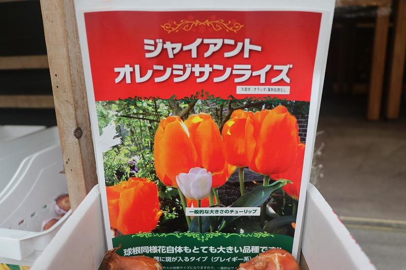 f:id:GP-Yamacho:20201010165857j:plain