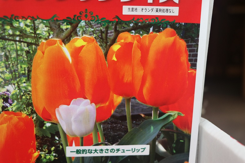 f:id:GP-Yamacho:20201010170058j:plain