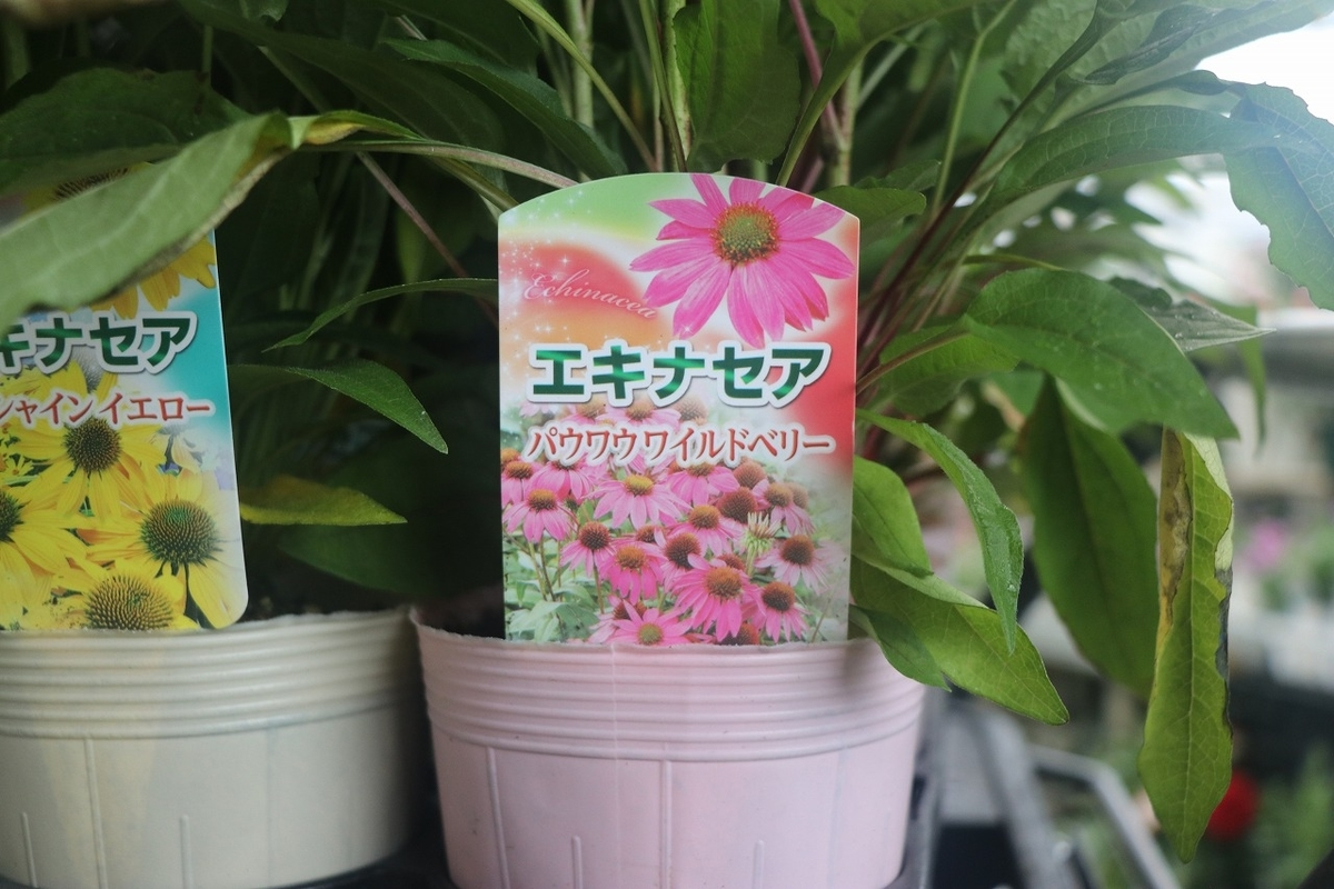 f:id:GP-Yamacho:20210616172546j:plain