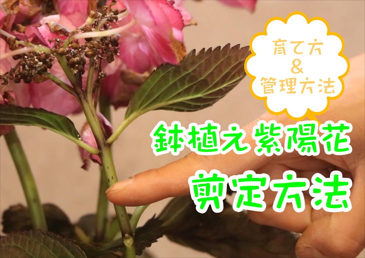 f:id:GP-Yamacho:20210630171653j:plain