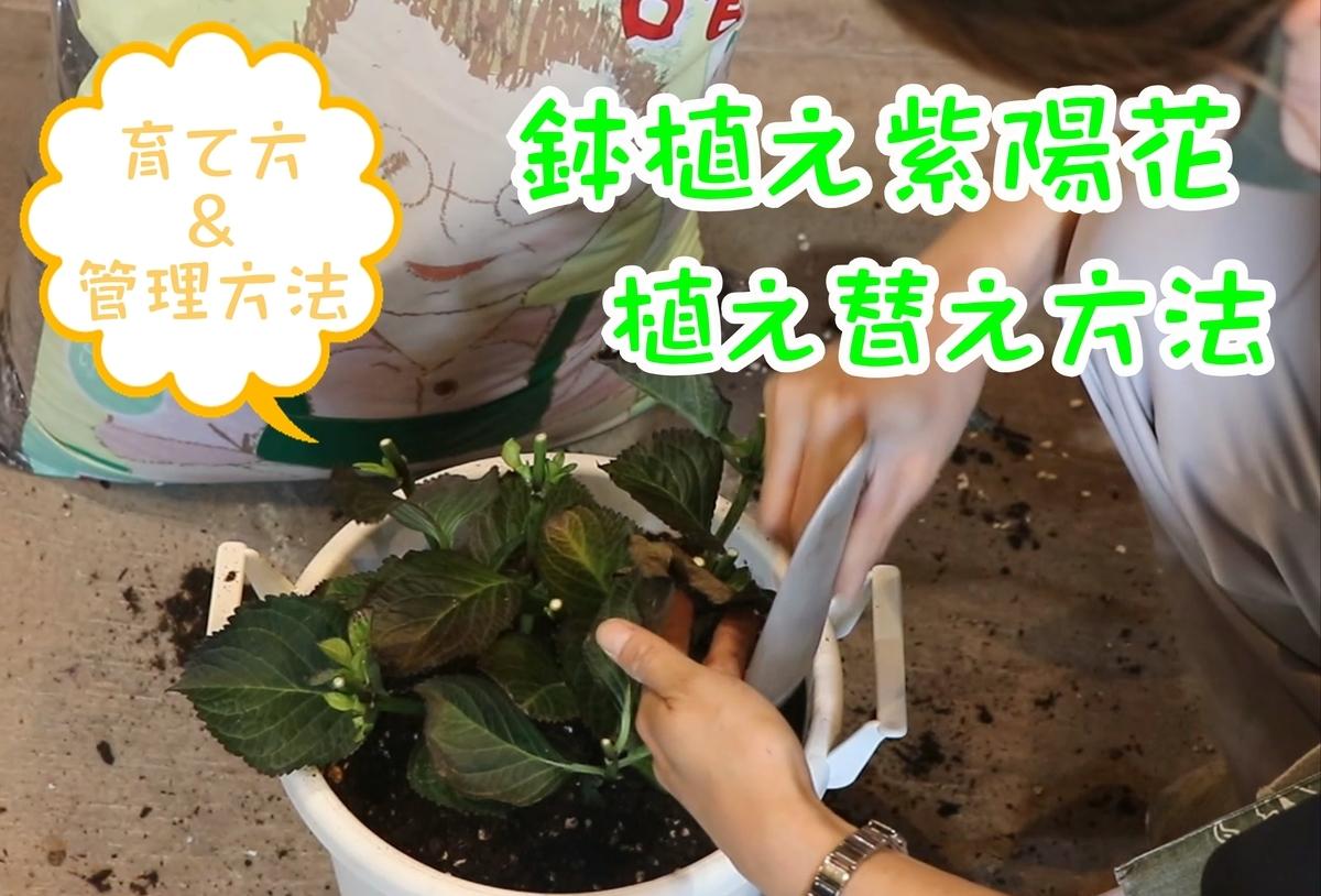 f:id:GP-Yamacho:20210630171655j:plain