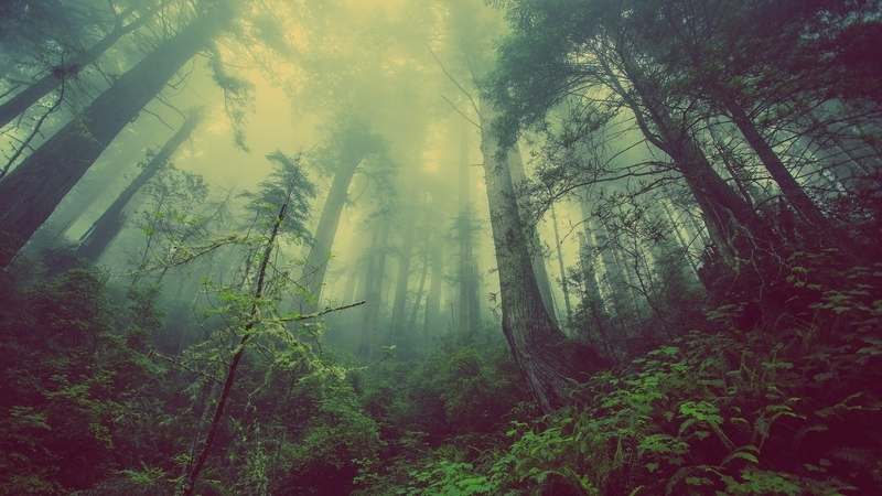 屋外の森林