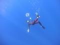 ハワイ 水中