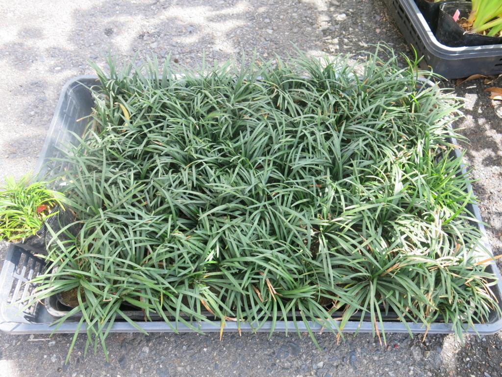 f:id:GardenPorter:20160420104934j:plain