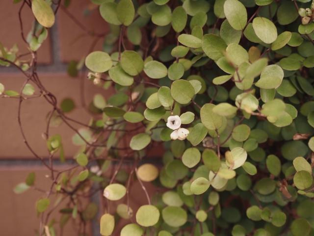 f:id:GardenPorter:20160422151851j:plain