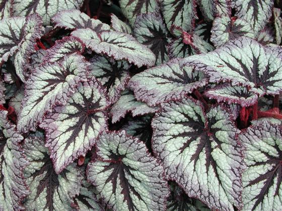f:id:GardenPorter:20160615170759j:plain