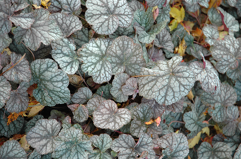 f:id:GardenPorter:20160615172501j:plain