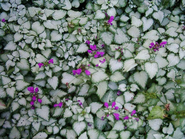 f:id:GardenPorter:20160615173456j:plain