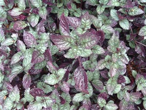 f:id:GardenPorter:20160616182217j:plain