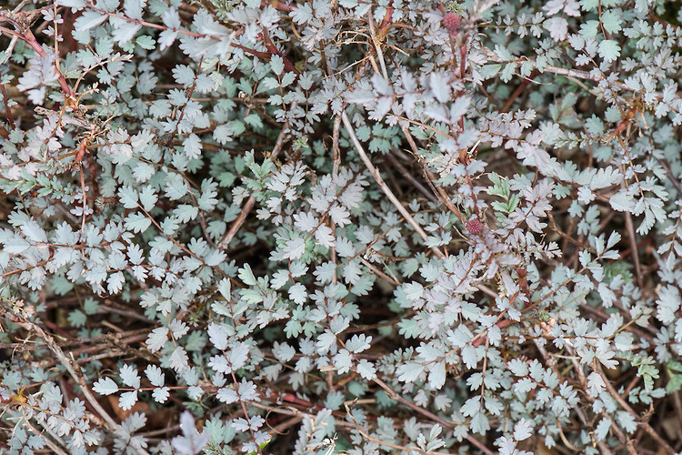 f:id:GardenPorter:20160616183316j:plain