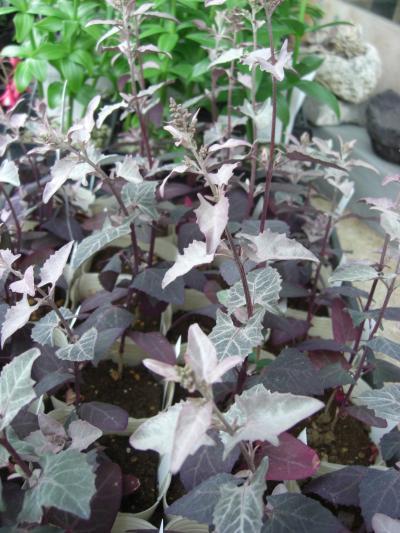 f:id:GardenPorter:20160617153153j:plain