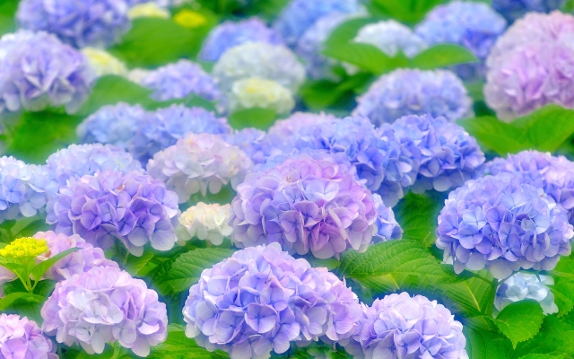 f:id:GardenPorter:20160627174026j:plain