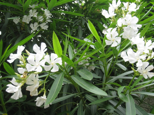f:id:GardenPorter:20160627174607j:plain