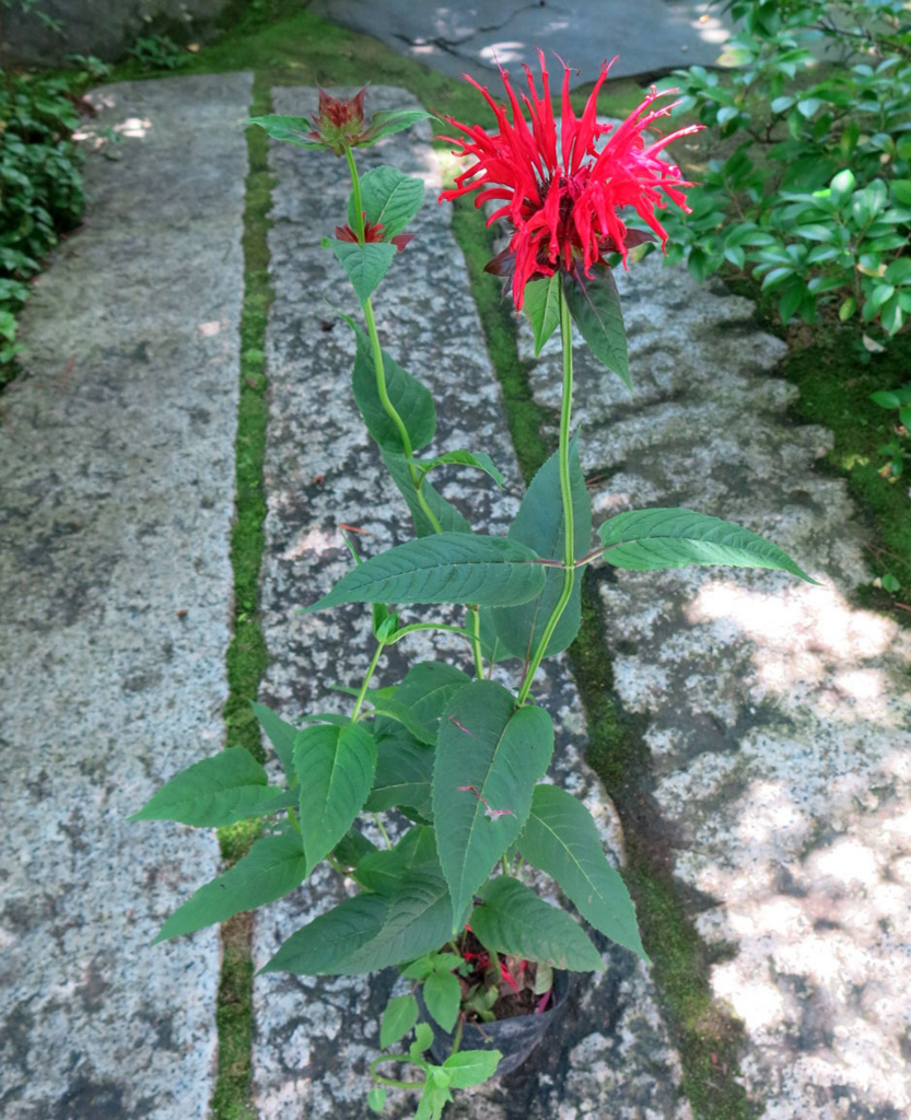 f:id:GardenPorter:20160707145812j:plain