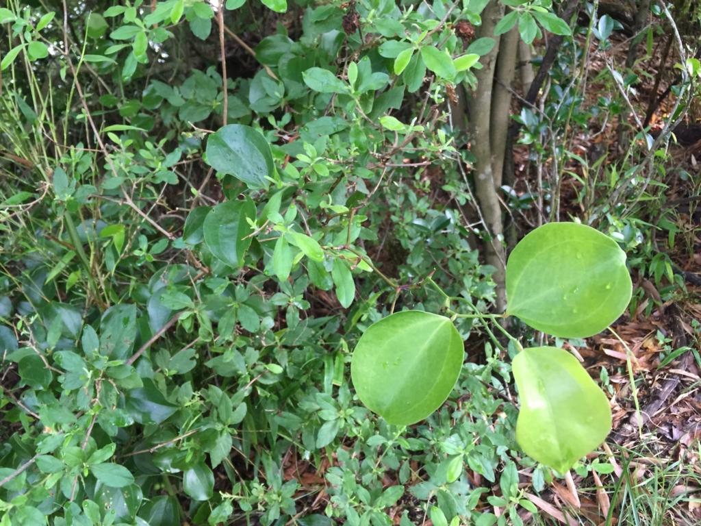 f:id:GardenPorter:20160713084925j:plain