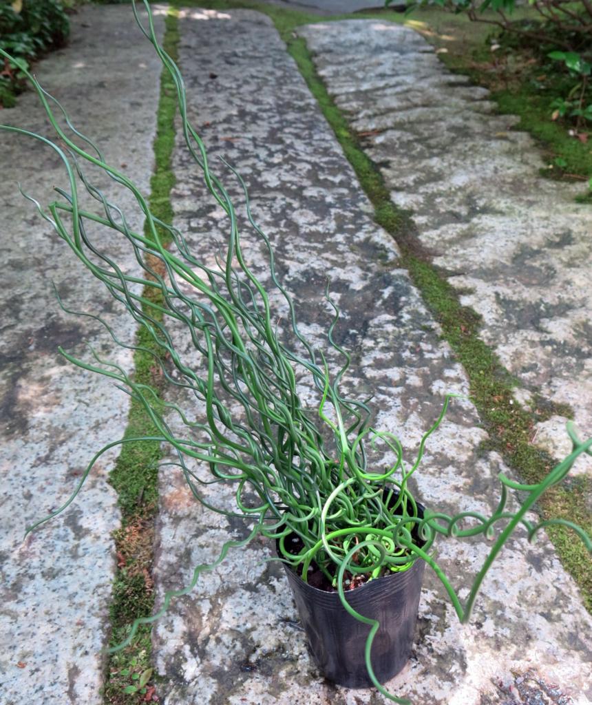 f:id:GardenPorter:20160721161143j:plain