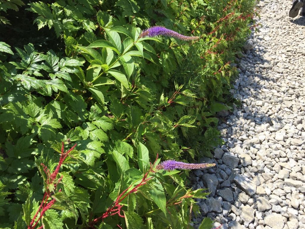 f:id:GardenPorter:20160801111113j:plain
