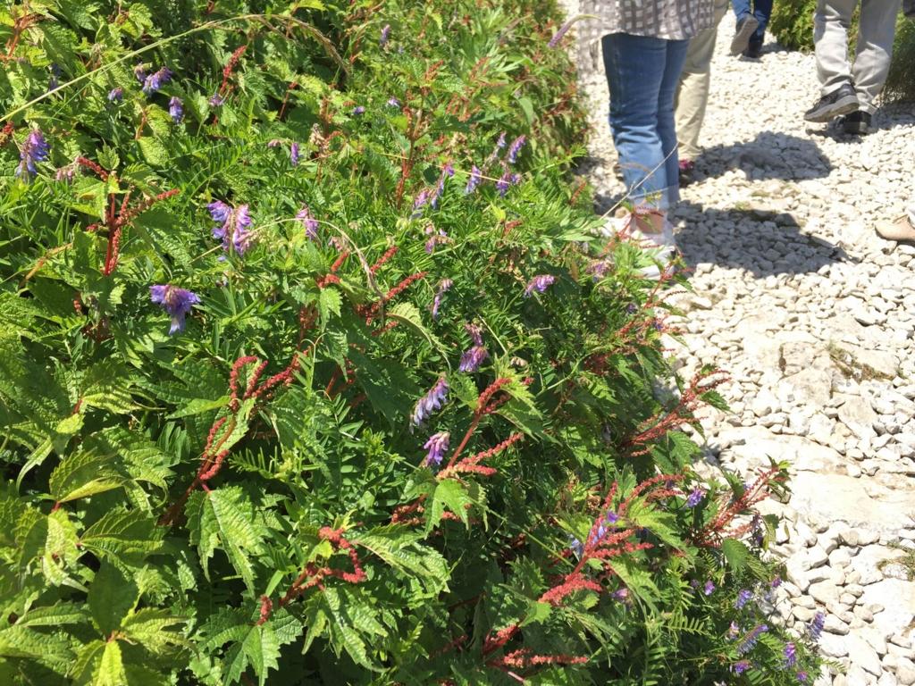 f:id:GardenPorter:20160801115201j:plain