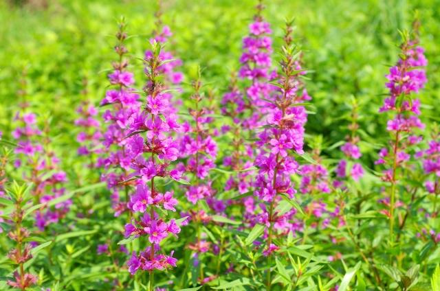 f:id:GardenPorter:20160805154059j:plain