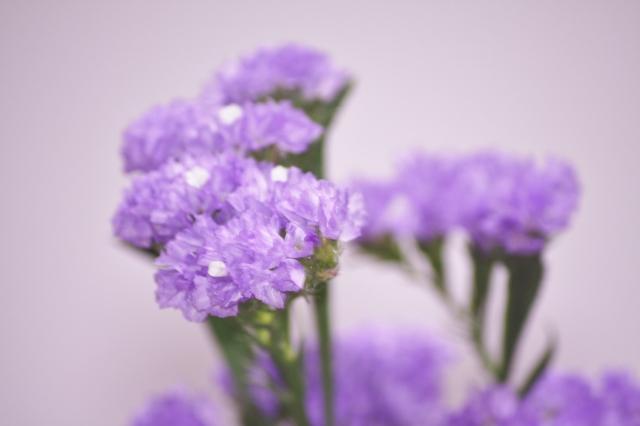 f:id:GardenPorter:20160805160157j:plain