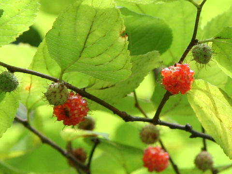 f:id:GardenPorter:20160811165800j:plain