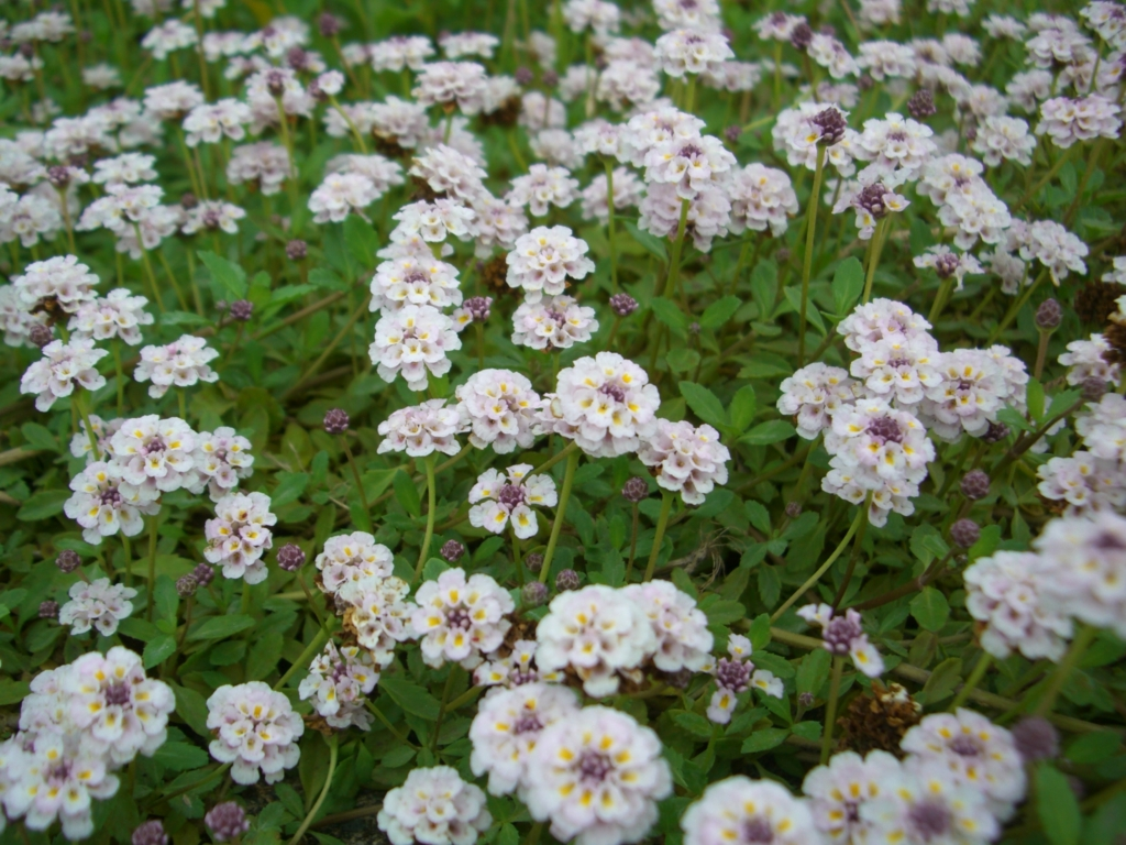 f:id:GardenPorter:20160822112623j:plain