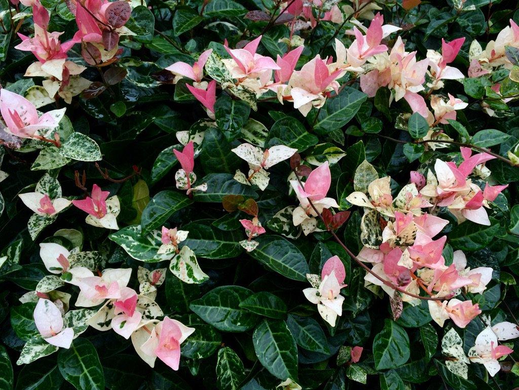 f:id:GardenPorter:20160822115849j:plain