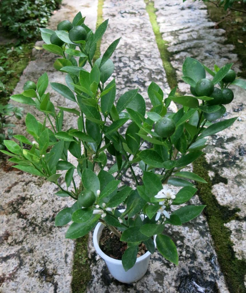 f:id:GardenPorter:20160901085341j:plain