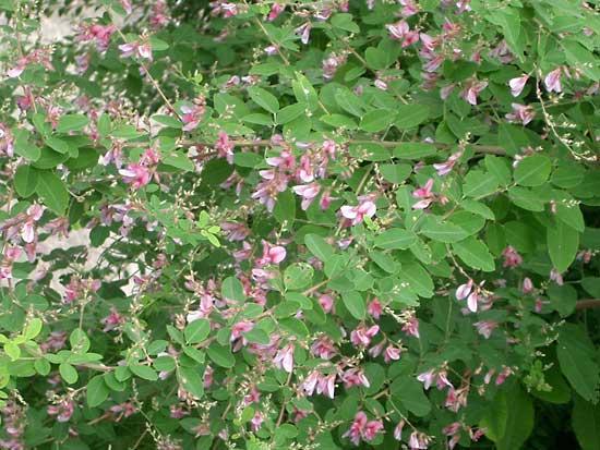 f:id:GardenPorter:20160921173334j:plain