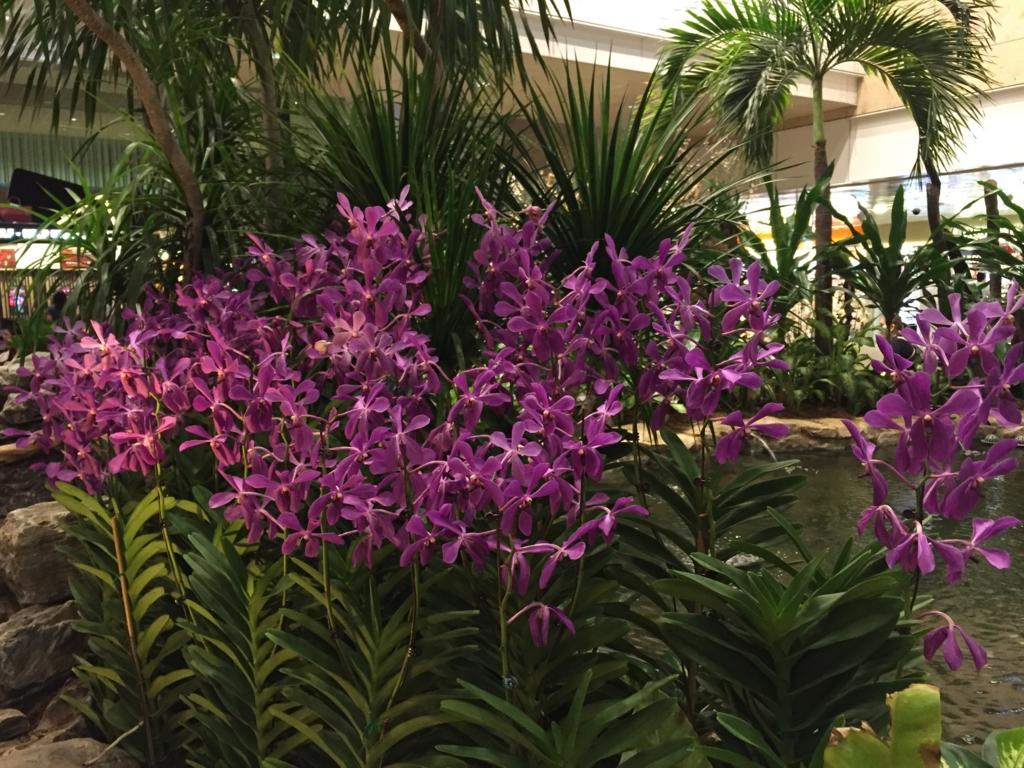 f:id:GardenPorter:20161003091725j:plain