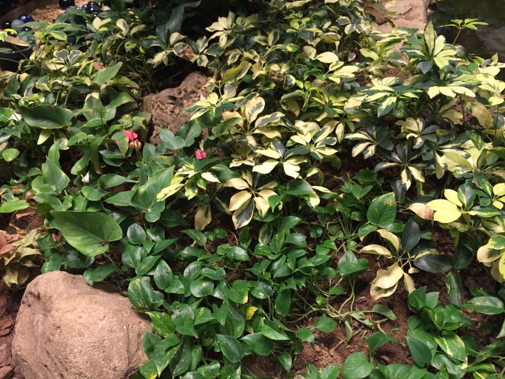 f:id:GardenPorter:20161003092152j:plain