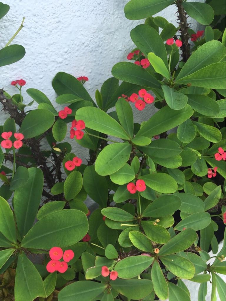 f:id:GardenPorter:20161003132710j:plain