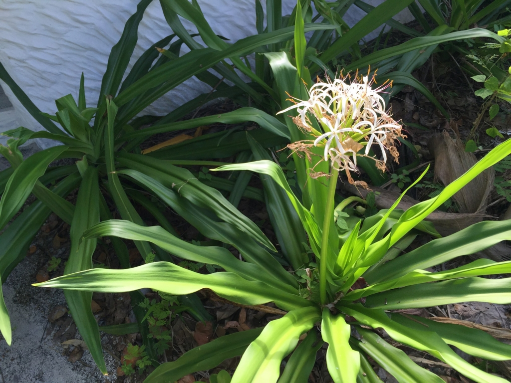 f:id:GardenPorter:20161005164753j:plain