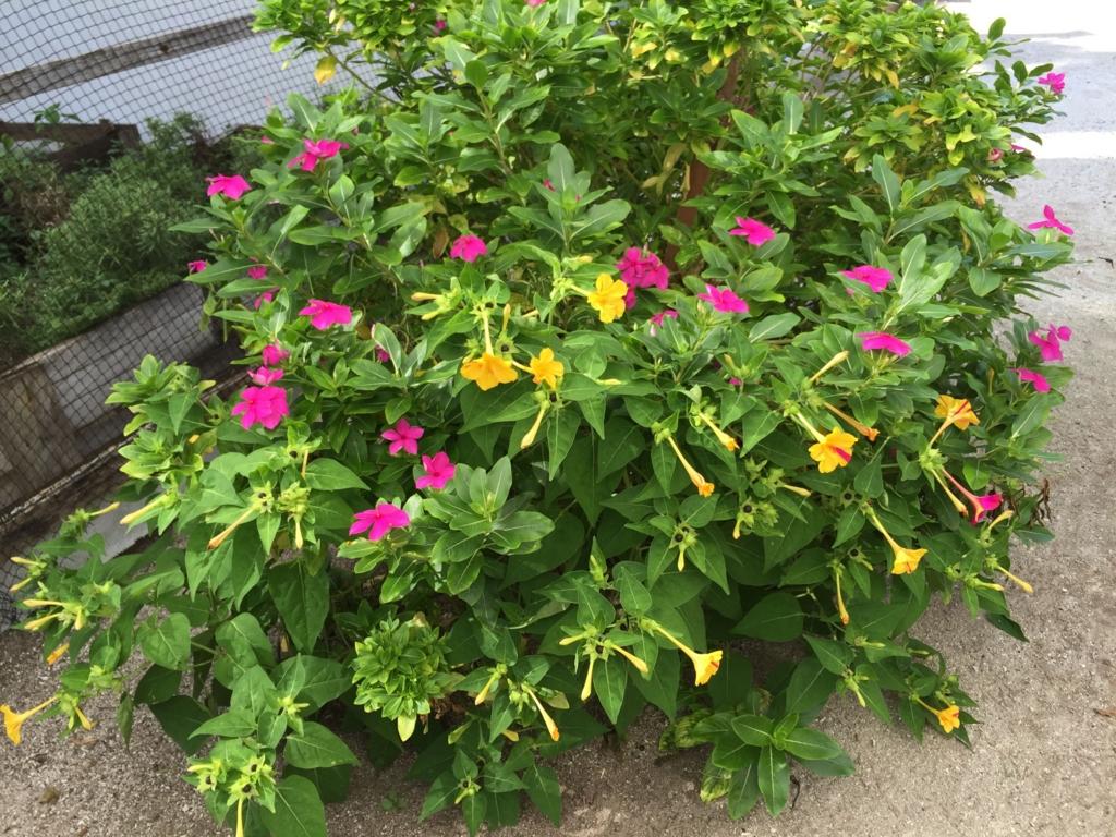 f:id:GardenPorter:20161006185552j:plain