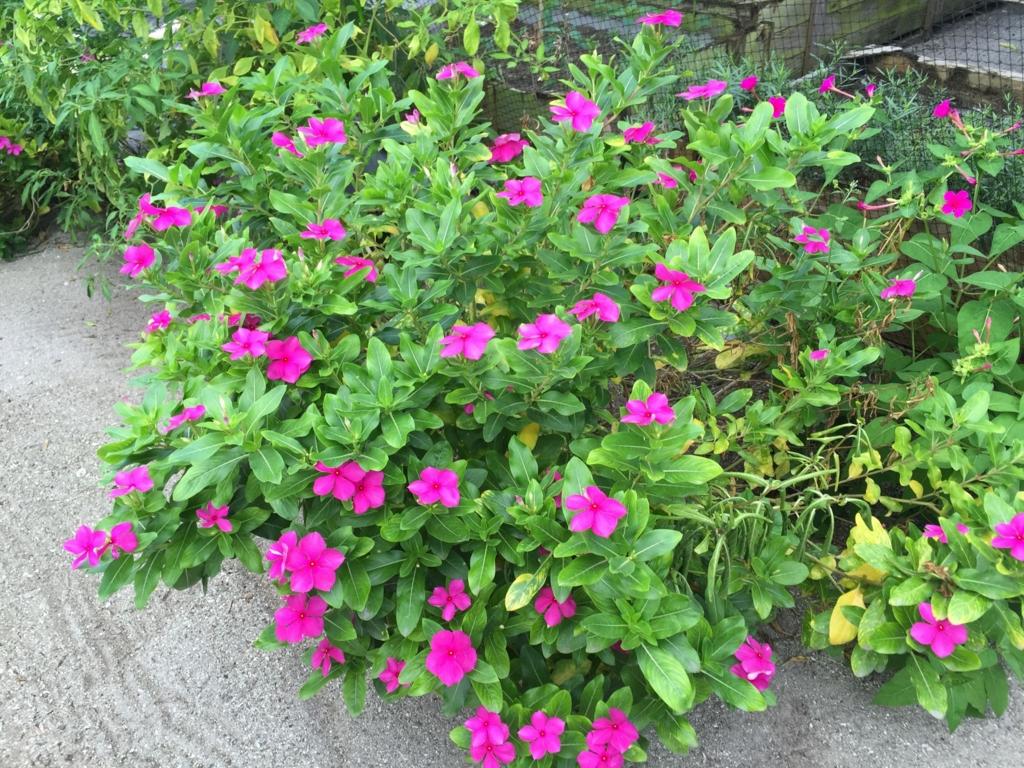 f:id:GardenPorter:20161006185643j:plain