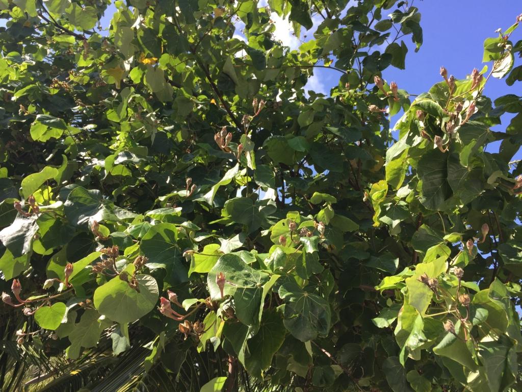 f:id:GardenPorter:20161006185914j:plain