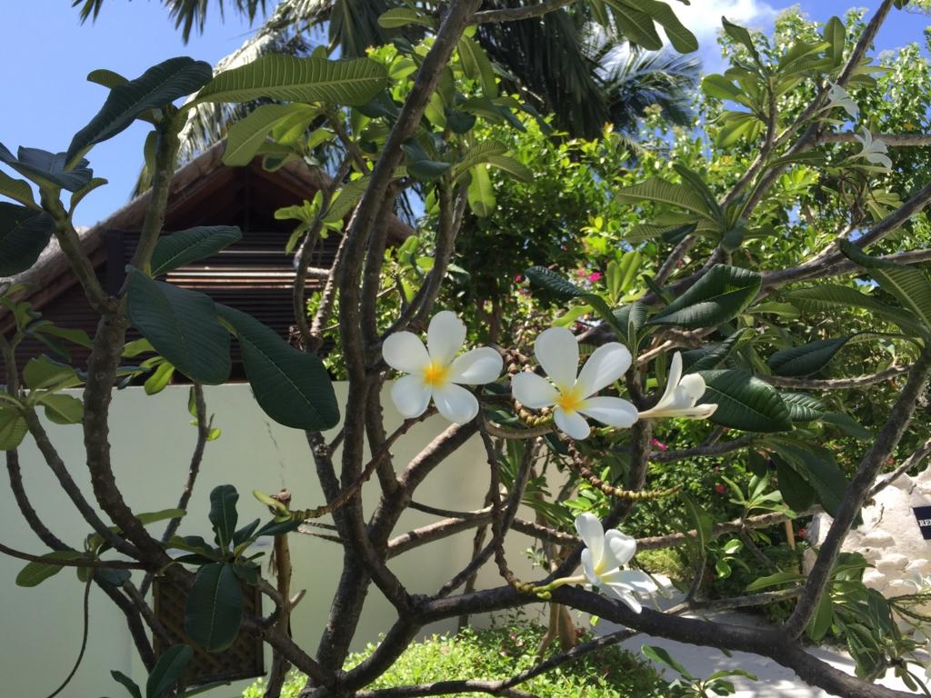 f:id:GardenPorter:20161006192553j:plain
