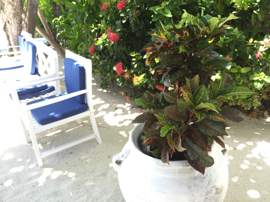 f:id:GardenPorter:20161007180120j:plain