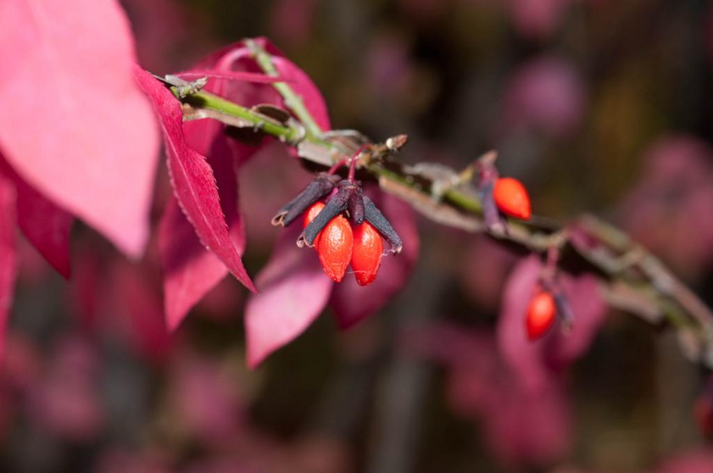 f:id:GardenPorter:20161010155313j:plain