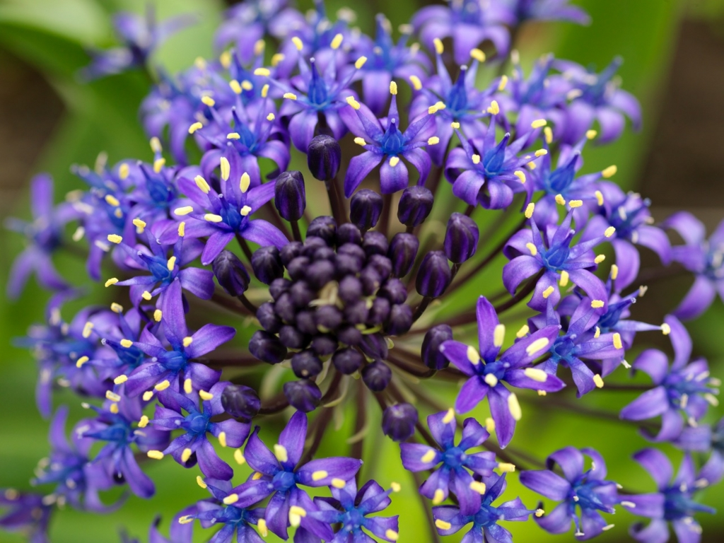 f:id:GardenPorter:20161017145758j:plain