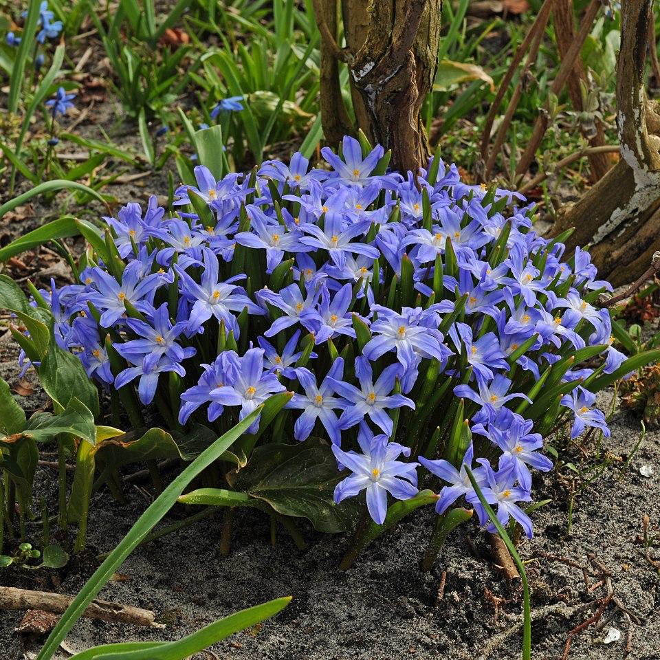f:id:GardenPorter:20161017150041j:plain