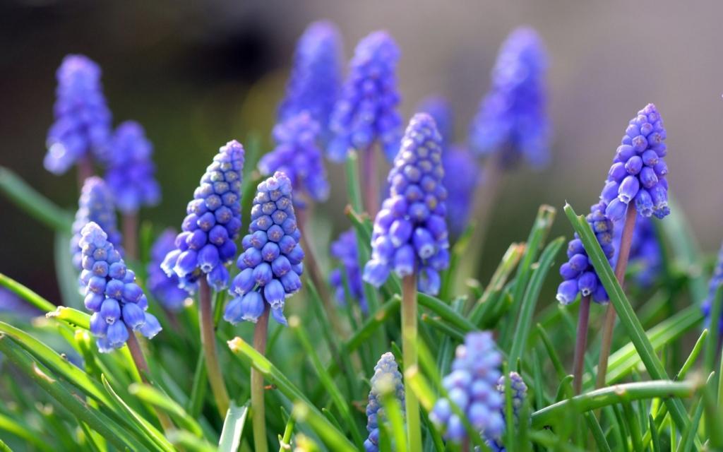 f:id:GardenPorter:20161017152218j:plain