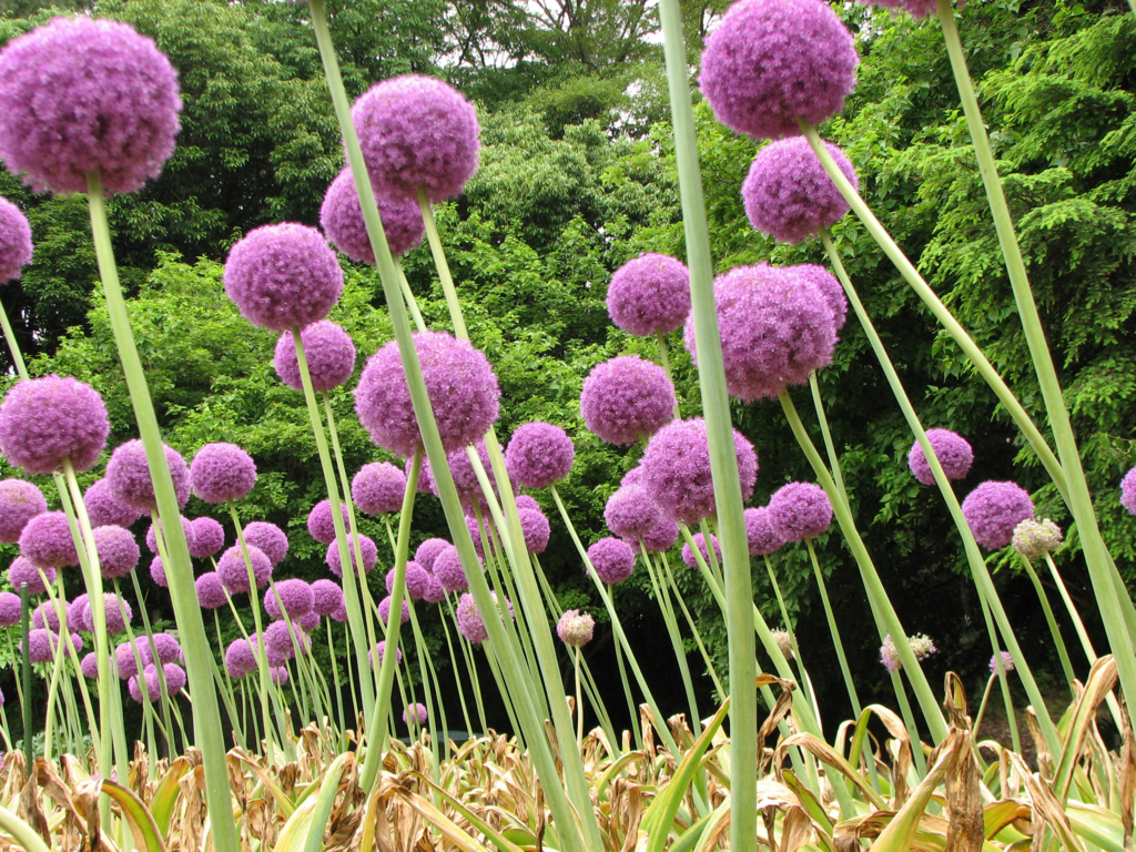 f:id:GardenPorter:20161017152634j:plain