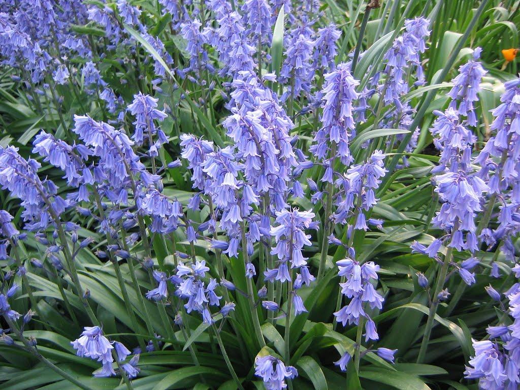 f:id:GardenPorter:20161017152848j:plain