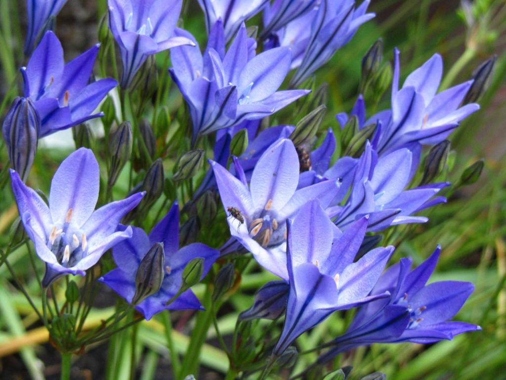f:id:GardenPorter:20161017153350j:plain