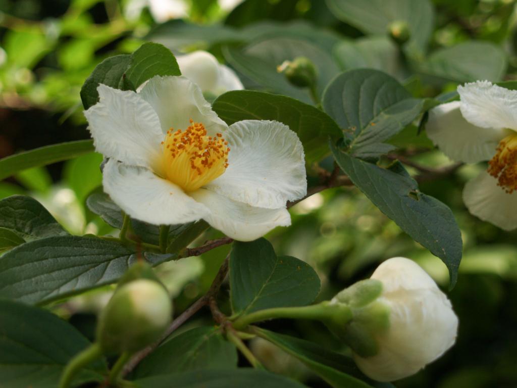 f:id:GardenPorter:20161024150815j:plain