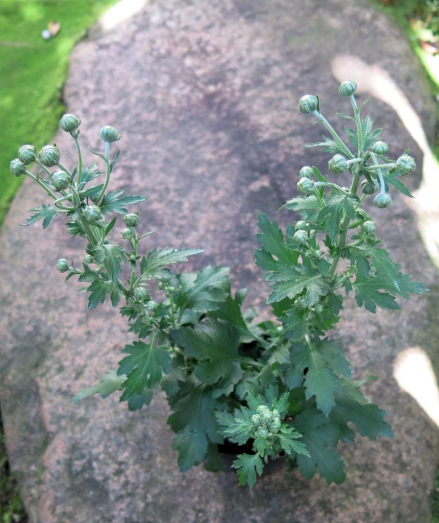 f:id:GardenPorter:20161027183515j:plain
